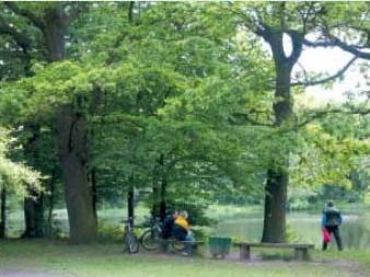 Najstarszy las komunalny Poznania - DĘBINA -